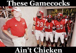 Aint chicken